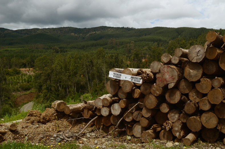 A pile of logs with a warning and logo of the Arauco company.