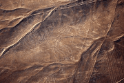 The Nazca geoglyph of a monkey is seen on the plains of the Nazca desert in southern Peru.